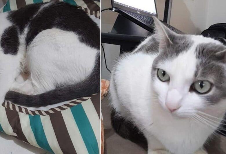 Gatinha Poppy desapareceu na região do Paulistano. Ajude a encontrá-la