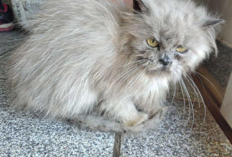 Homenagem da Funerais Pet à gatinha Izzy