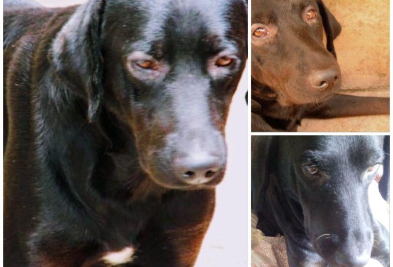 Homenagem da Funerais Pet ao cachorro Laikan