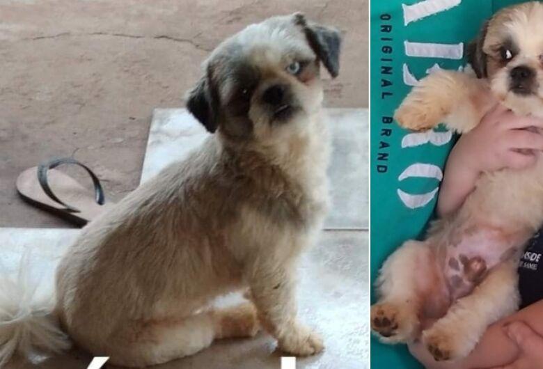 Cachorro Chulé desapareceu na região do Abdelnur/Zavaglia. Ajude a encontrá-lo