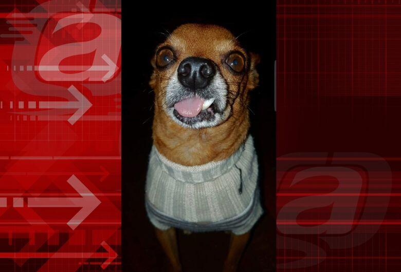 Homenagem da Funerais Pet ao cachorrinho Tico