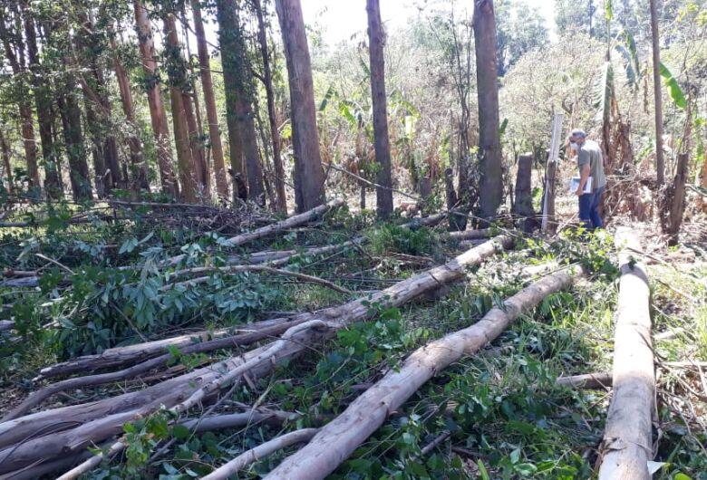 Fiscalização e GM flagram homens cortando eucaliptos de forma ilegal em área pública no Itamarati