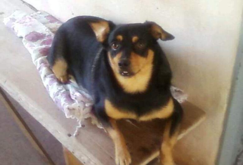 Homenagem da Funerais Pet a cachorrinha Babi Salgueiro  Giraldello
