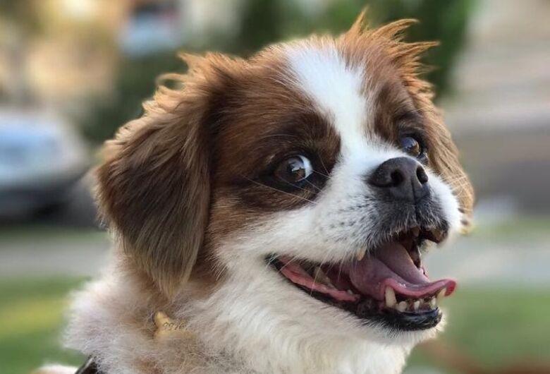 Homenagem da Funerais Pet ao cachorro Max