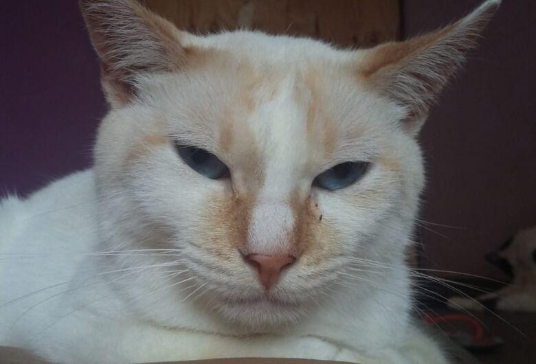 Homenagem da Funerais Pet ao gatinho Juca