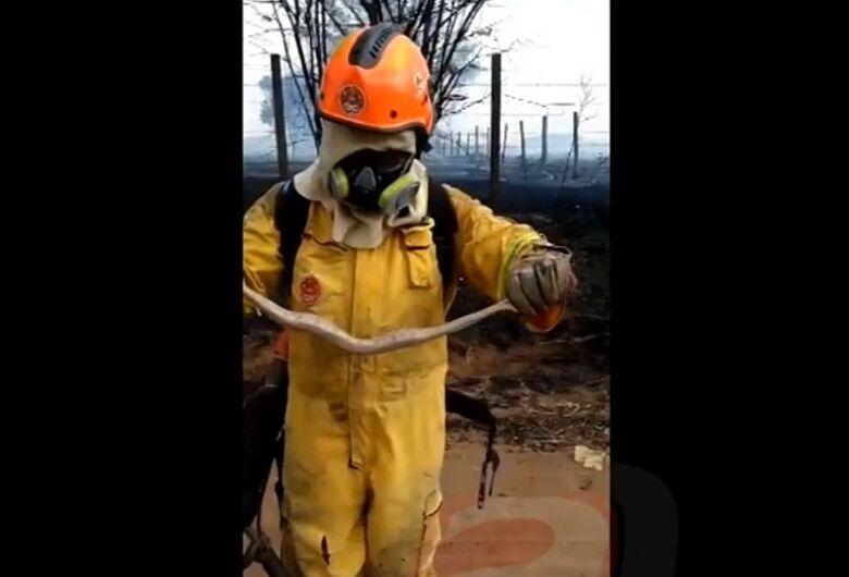 Bombeiros salvam cobra de incêndio em mata no Embaré