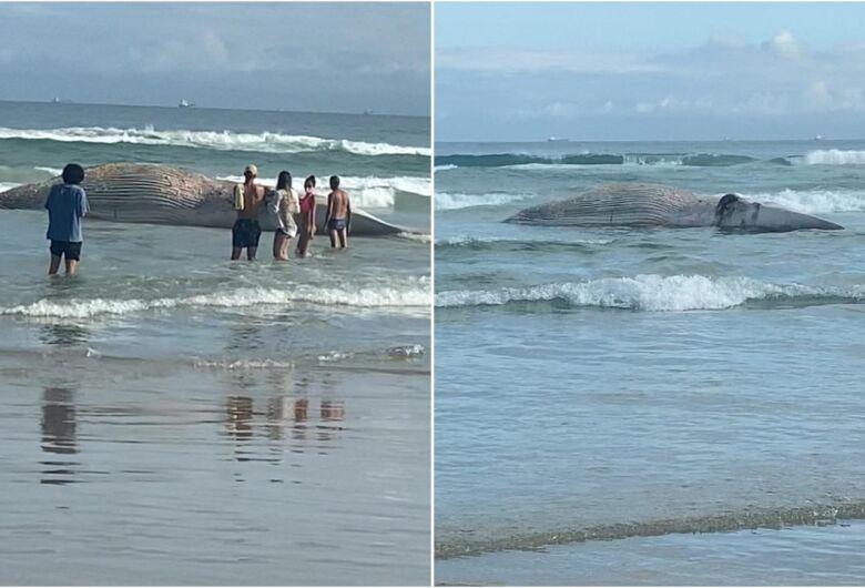São-carlense flagra baleia morta no Guarujá