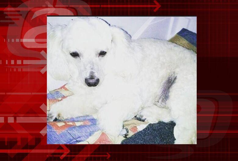 Homenagem da Funerais Pet a cachorrinha Mel Cristina