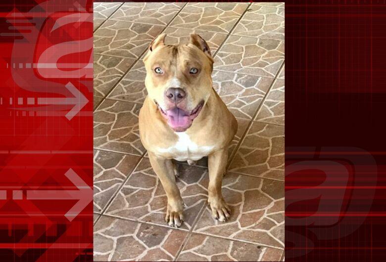Cachorrinho Thor desaparece na região de Água Vermelha; família oferece recompensa