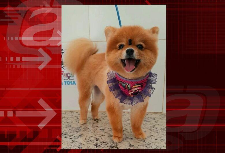 Cachorrinha Jade desapareceu na região da Rodoviária. Ajude a encontrá-la