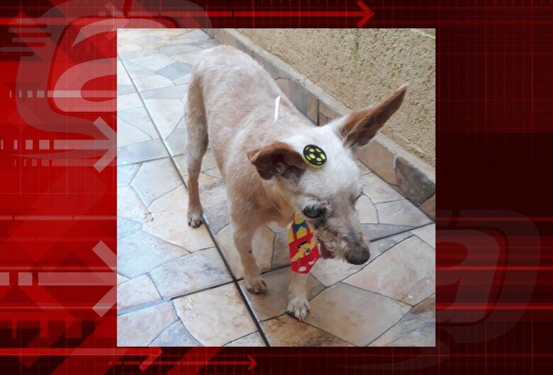Homenagem da Funerais Pet ao cachorrinho Vitório
