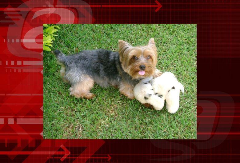 Homenagem da Funerais Pet ao cachorrinho Nino