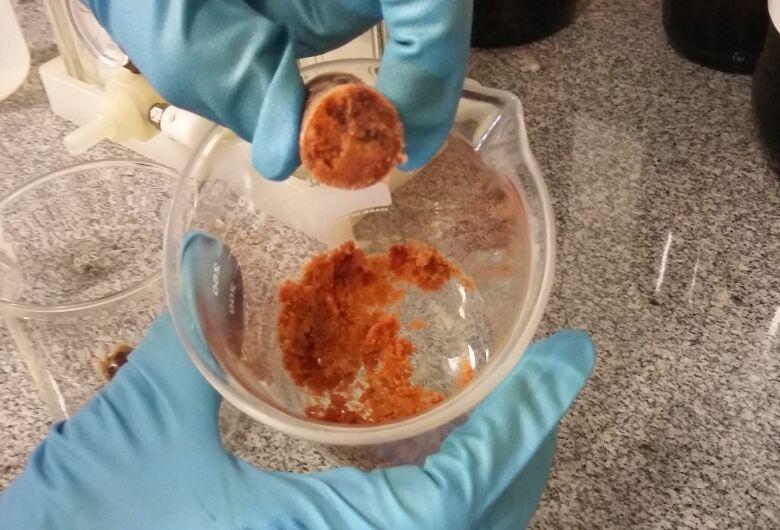 Segundo pesquisa na USP, própolis vermelha tem substâncias que inibem o crescimento de células cancerígenas