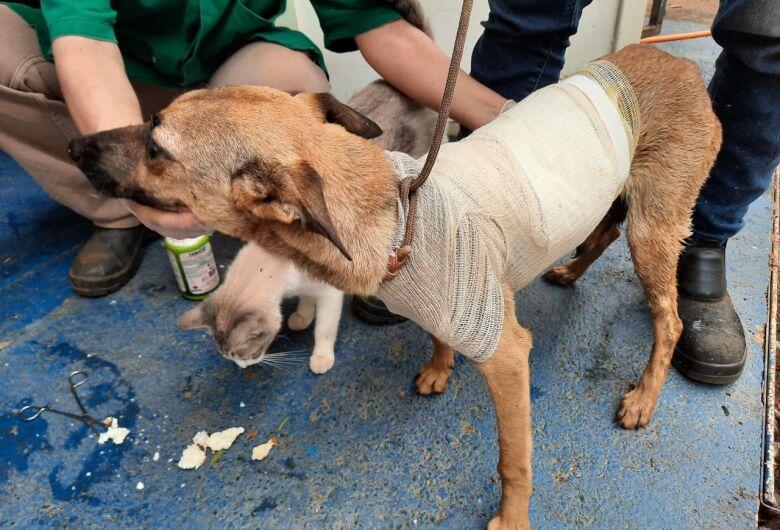 Departamento de Defesa Animal recolhe mais de 50 animais por mês