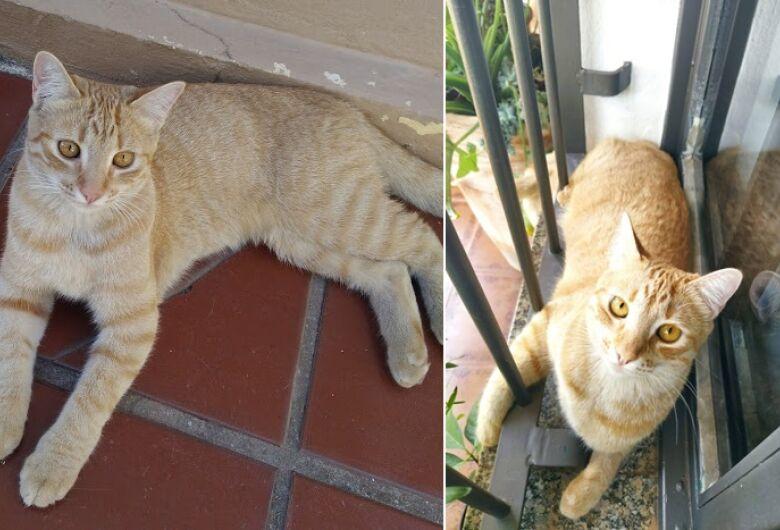 Gatinha Sol desapareceu na região do Boa Vista