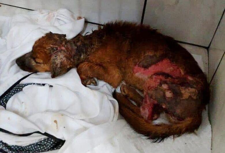 Caso da cadela queimada em Araraquara ganha repercussão nacional