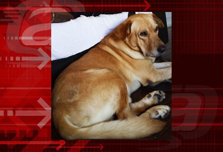 Homenagem da Funerais Pet ao cachorro Thiger