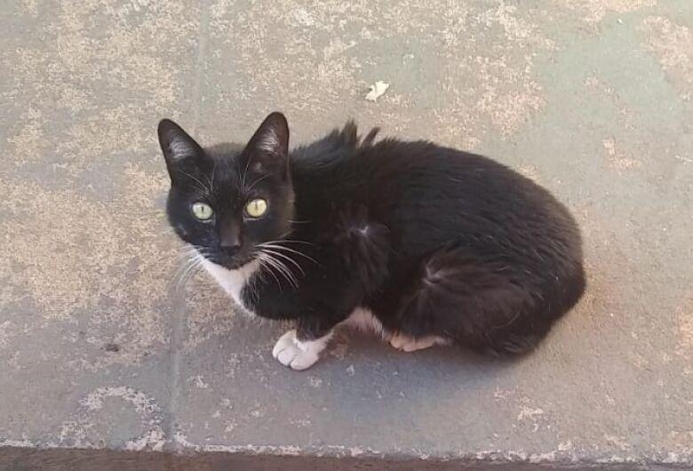 Homenagem da Funerais Pet ao gatinho Michel Simão