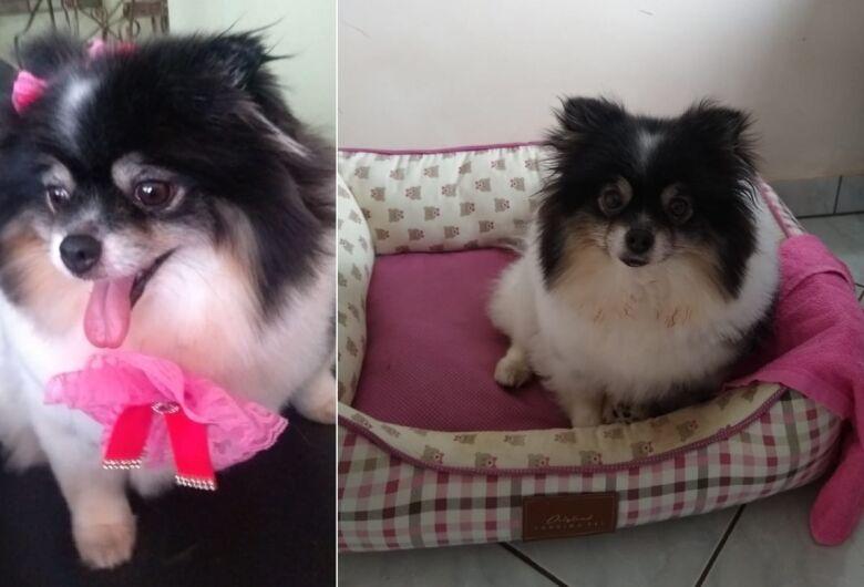 Cachorrinha Pandora desapareceu na região do Jardim Ricetti