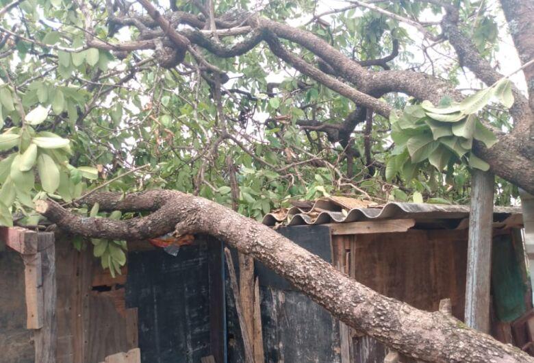 Mãe pede socorro: árvore cai em cima de barraco no Aracy