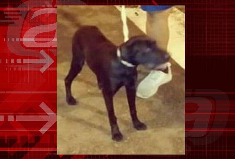 Cachorra Kiara desaparece na região do Itamaraty