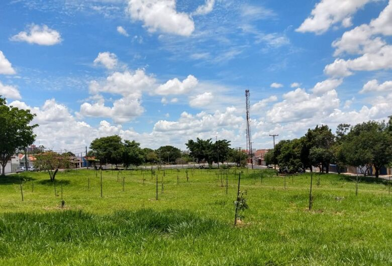 UFSCar e Rotary Pinhal ganham novo parceiro em projeto de arborização urbana