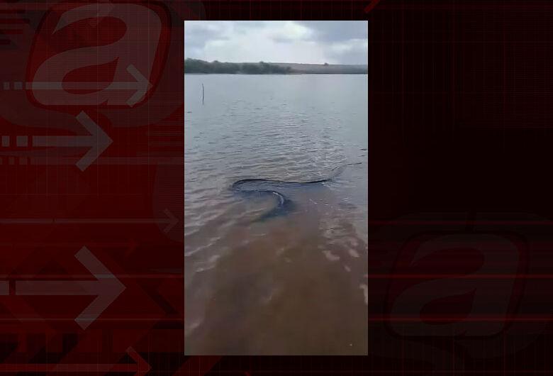 Cobra de grande porte é flagrada nadando na represa do 29