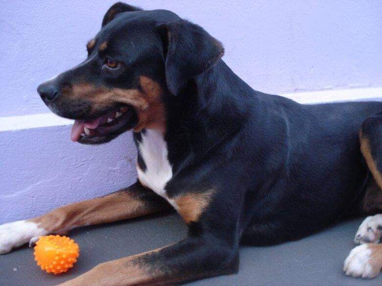 Homenagem da Funerais Pet a cadela Liliti Morgana Locatelli -