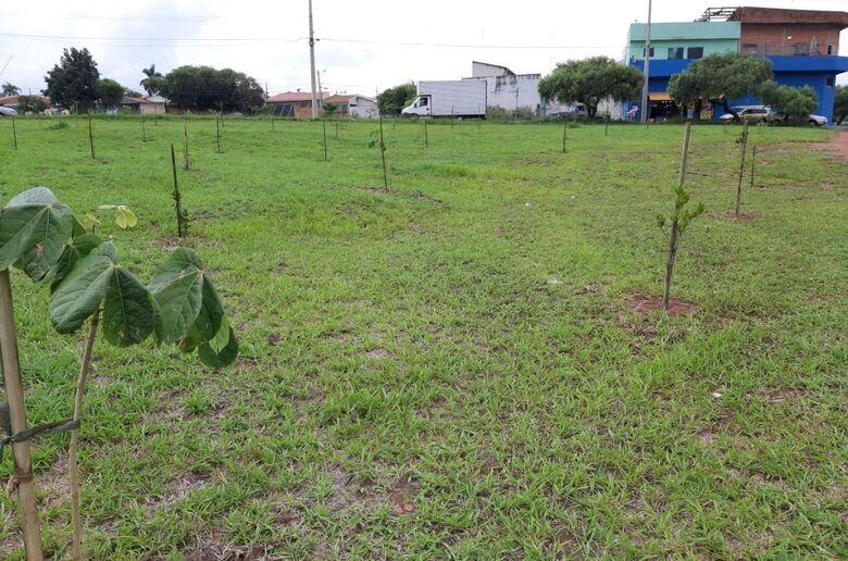 Quinto plantio, com mudas de espécies nativas e frutíferas - Crédito: Gustavo Galetti/UFSCar