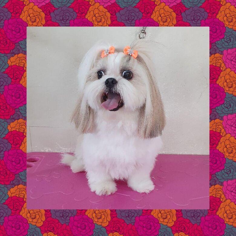 Homenagem da Funerais Pet à Cachorrinha Cindy -