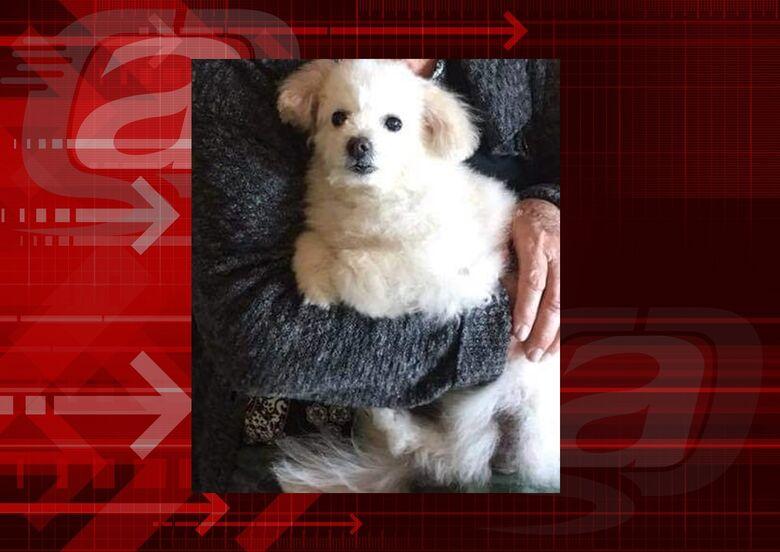 Homenagem da Funerais Pet ao cachorro Tico -