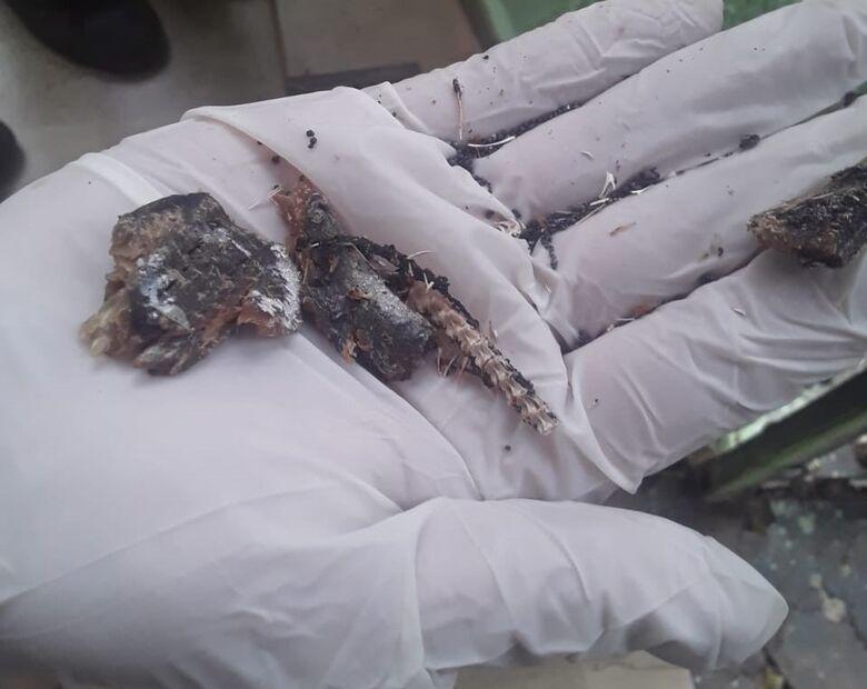 Carne de peixe com chumbinho matou três gatos e dois cães na Vila São José - Crédito: Divulgação