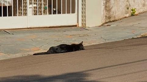 Gato morto por envenenamento em frente a uma residência na região central de São Carlos - Crédito: Divulgação