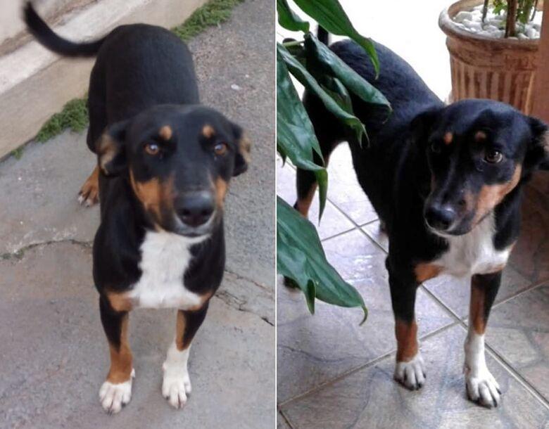 Cachorra Riana desaparece na região do Cidade Jardim -