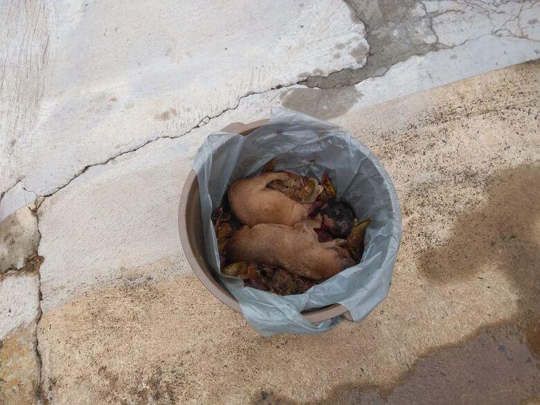Cães foram jogados no lixo - Crédito: Maycon Maximino