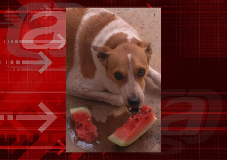 Homenagem da Funerais Pet a cachorrinha Nina -