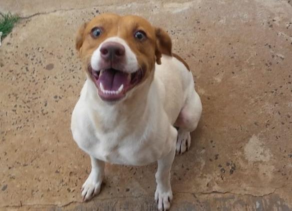 Homenagem da Funerais Pet ao cachorrinho Lupi -