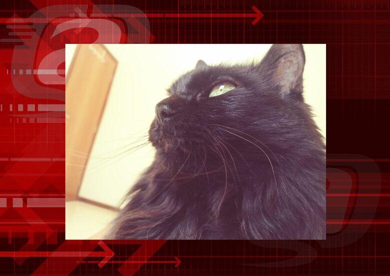 Homenagem da Funerais Pet a gatinha Peluda -