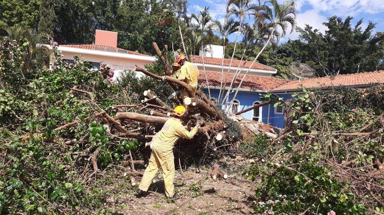 Árvore de grande porte caiu no Nova Santa Paula - Crédito: Colaborador SCA