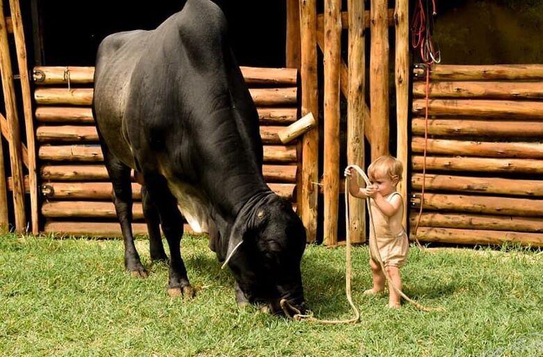 Adestramento de animais e Pitó e Davi Silva são atrações do AGROARENA deste domingo - Crédito: divulgação