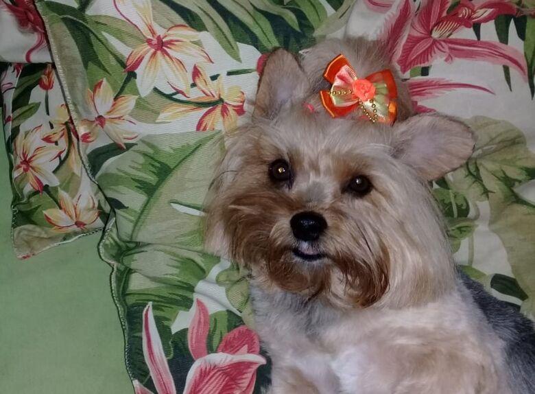 Homenagem da Funerais Pet a cachorrinha Lizie -