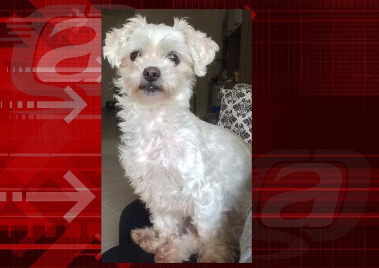 Cachorrinha Maya desaparece no Santa Felícia. Ajude a encontrá-la -
