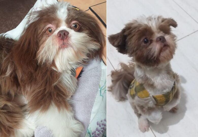 Cachorro Simba desaparece na região do Boa Vista -