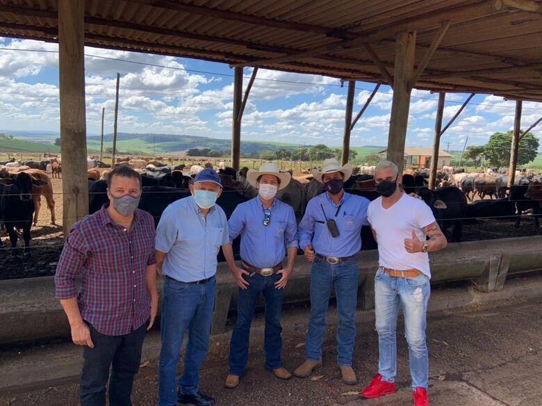 São Carlos vai exportar 5 mil cabeças de gado para Arábia Saudita - Crédito: divulgação