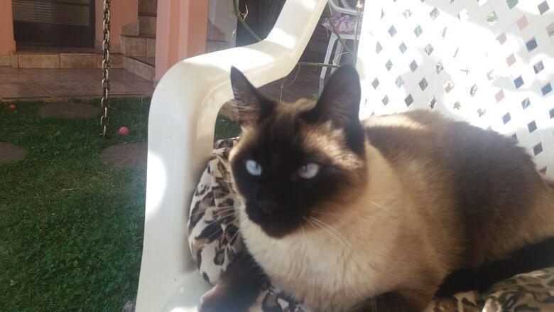 Procura-se por gato desaparecido na Vila Monteiro -