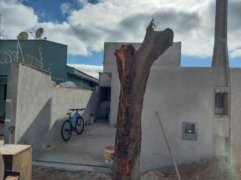 Morador é multado pela Polícia Ambiental após realizar poda drástica de árvore no Cidade Aracy - Crédito: Colaborador SCA