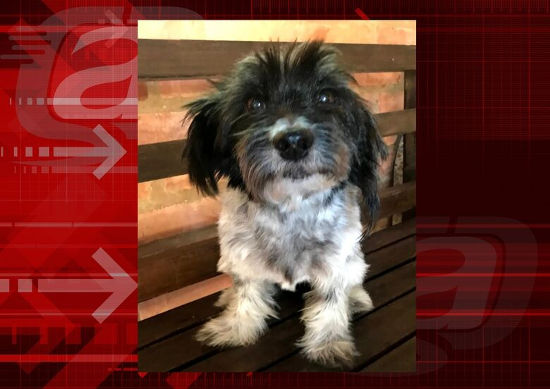 Cachorrinha Nina desaparece no Planalto Paraíso. Ajude a encontrá-la -