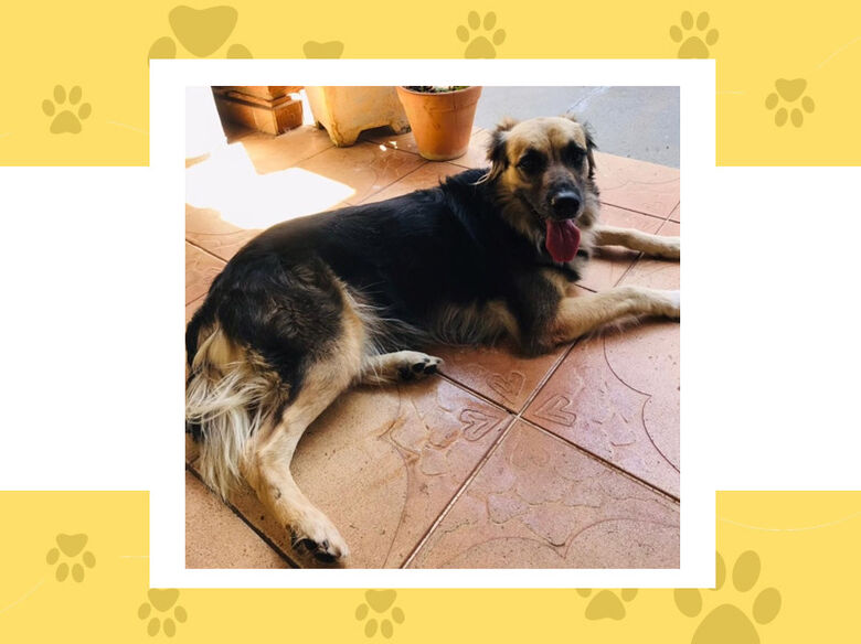 Cachorra Naomi desapareceu na Vila Brasília; ajude a encontrá-la -