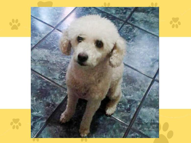 Cachorrinha Penélope desapareceu na região do Jd. Botafogo; ajude a encontrá-la - Crédito: arquivo pessoal