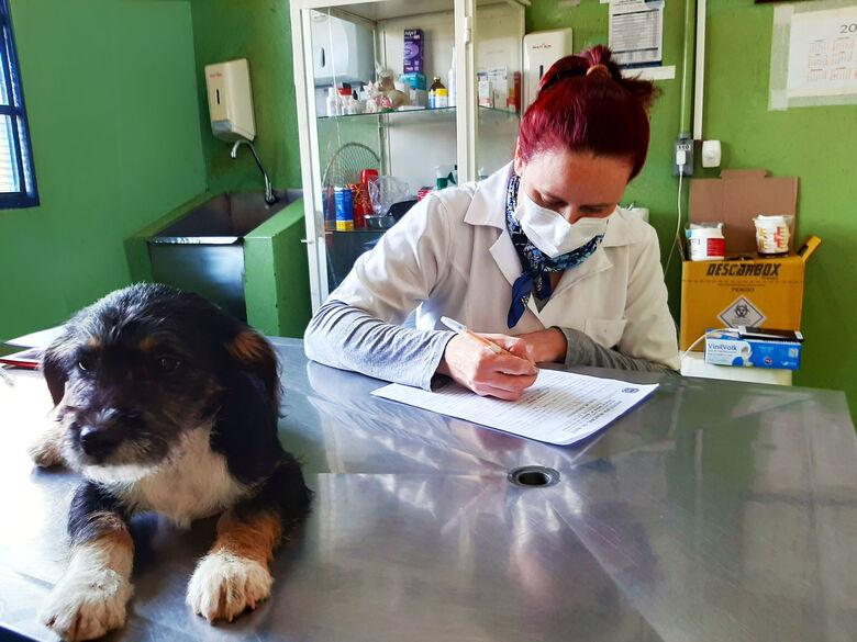 CCZ tem cães e gatos para adoção. Animais são recolhidos pela equipe, castrados, vermifugados e estão com vacinação de raiva anual em dia - Crédito: Divulgação